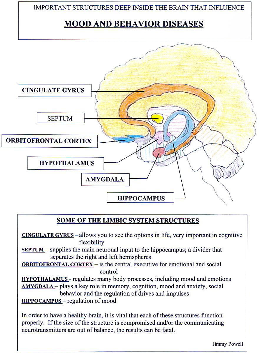 Important structures deep inside the brain tha influence mood and behavior